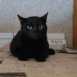 保護猫を迎えよう!No.114くん!♂️