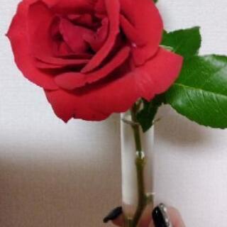 薔薇🌹10本セット