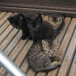 四兄弟 あと黒1匹