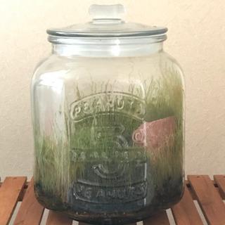 観葉植物 瓶詰めのシダ