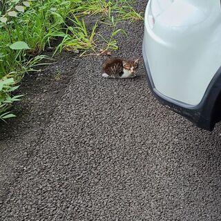 生後1ヶ月 オス猫