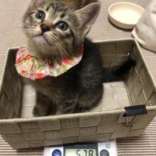 子猫だけのミニミニ譲渡面談会(5/22〜5/23)