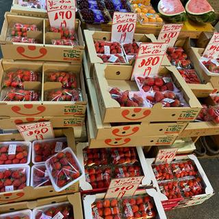 イチゴ安いです!  本日限定!
