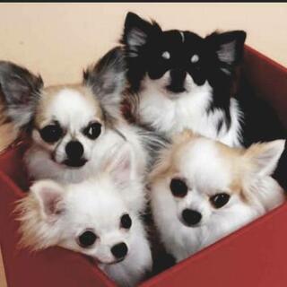 LINEで集うペット友情報交換、雑談コミュ❤【犬友募集】