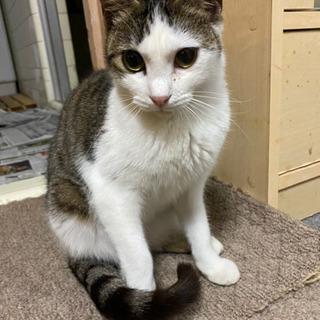 甘えん坊のかわいい猫ちゃんの里親さん募集!