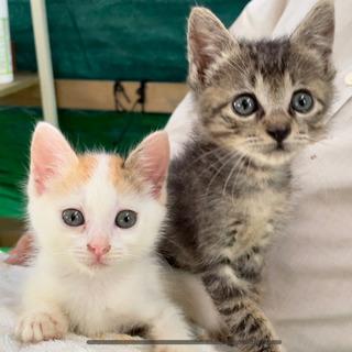 かわいい子猫の里親を探しています
