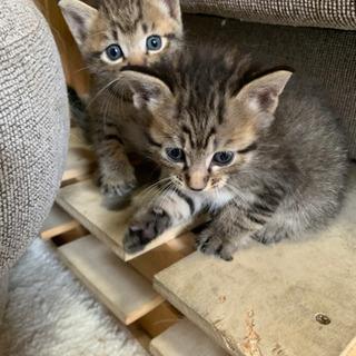 可愛い子猫の里親募集