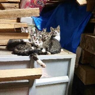 生後〜約1ヶ月程の3匹の子猫と親猫