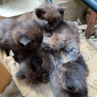 野良猫が子猫を4匹産みました【決まりました。皆様ありがとうございます】