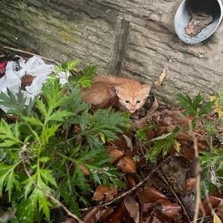 野良 子猫 生後約1ヶ月 茶トラ