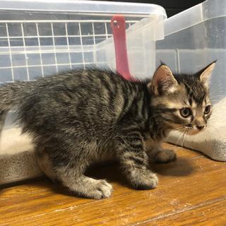 [募集停止]  4/6生まれの子猫と母猫