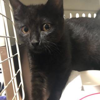 [募集停止]4/27 保護 推定3〜4カ月の黒猫 ♀