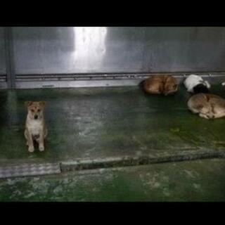 動物愛護センターに寄付します。