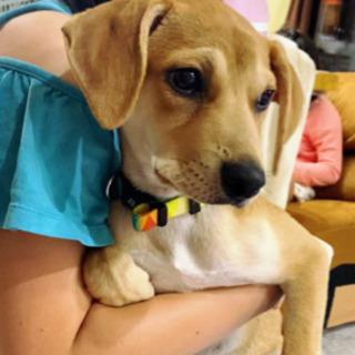 もうすぐ生後4ヶ月❣️保護犬🐶