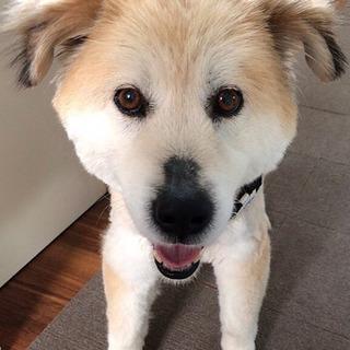【室内飼い限定】大型ミックス癒し犬♀推定6歳