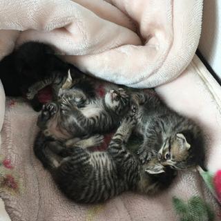 5月7日生まれの子猫ちゃん達です!