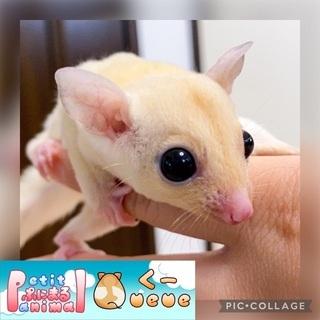 小動物、メダカ専門店のPetit Animal Queue(ぷに...