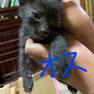 4月末産まれの子猫7匹