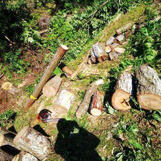 お家の樹木の伐採、山林の整備 間伐