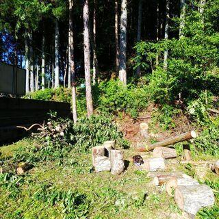 お家の樹木の伐採、山林の整備 間伐  - 瀬戸市