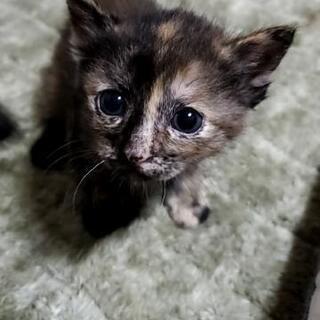 自宅で野良猫が出産しました。