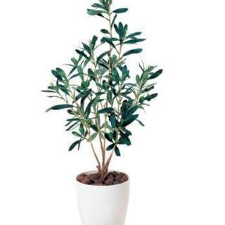 オリーブの木 フェイクグリーン
