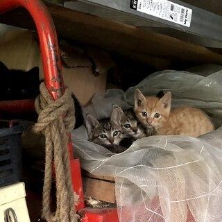 納屋で野良猫が子供を産みました