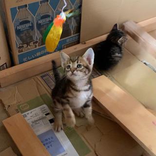 可愛い子猫の里親募集🐈