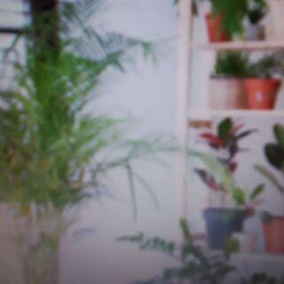 【観葉植物&鉢植え】譲りたい人から欲しい人へ・・・観葉植物・鉢植...