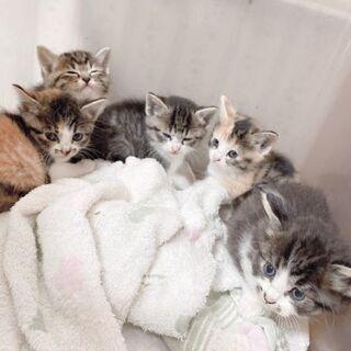 新しい家族を探しています(里親決定いたしました)