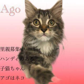 サイベリアン  子猫 本文をよくご覧下さいませ。  アゴはネコ