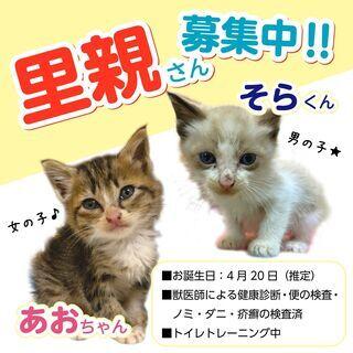保護した子猫の里親様募集中です