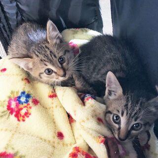 兄弟子猫2匹一緒に飼ってくださる方