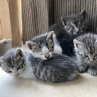 【里親様への引き渡し完了しました】野良猫が子猫を4匹連れて来ました