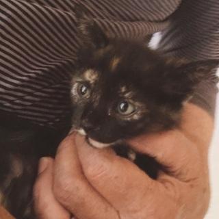 約9週のサビ猫ちゃん