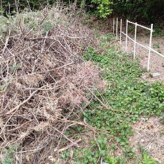 焚き木・キャンプなどに‼️ 松 伐採木 枝木 葉 欲しい方