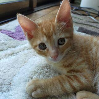 里親募集 野良猫が産んだ生後1か月半のオス茶トラ?