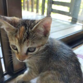 里親募集 野良猫が産んだ子猫メスです