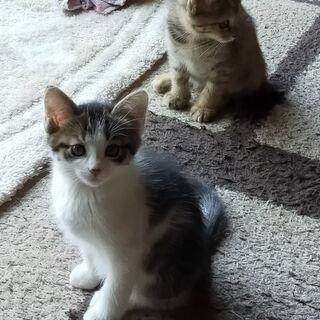 里親募集 野良猫が産んだメスの子猫です