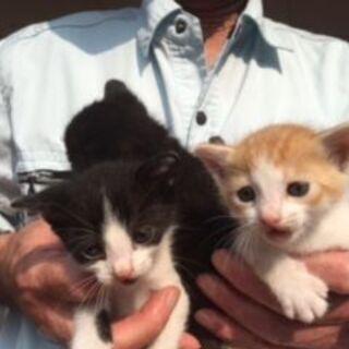 森林公園に捨て猫3匹 里親募集です