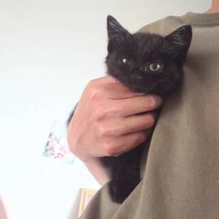 黒猫★生後1ヶ月半くらい