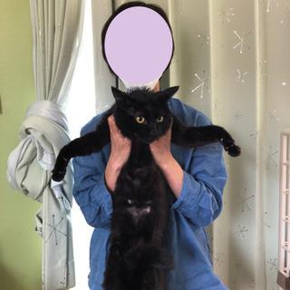 おっとり黒猫5〜8才