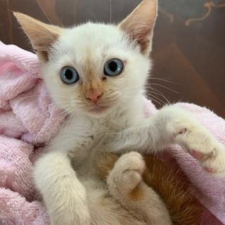 【助けてください!】仔猫の里親募集【ドタキャンされたため再募集です】