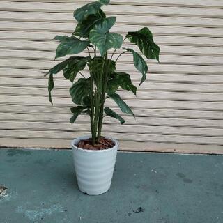 【ネット決済】 造花の植木鉢、取りに来てもらえる方のみ
