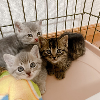 【里親募集】可愛い3兄妹