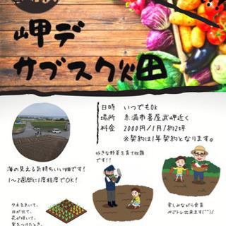 サブスク畑!月2000円‼️