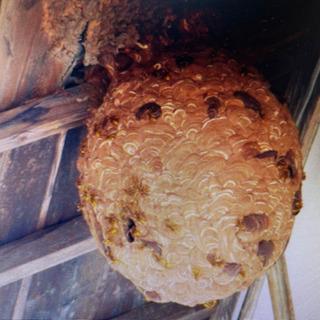 これからが危ない 蜂の巣駆除・雨漏り お気軽に連絡下さい