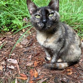 サビ猫ちゃん 可愛がってくださるかたお願いします。