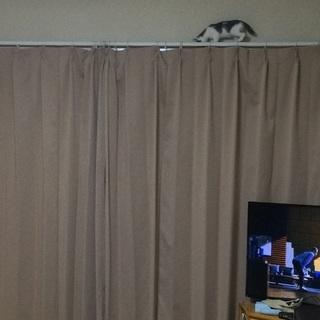 ほわほわ白猫さん