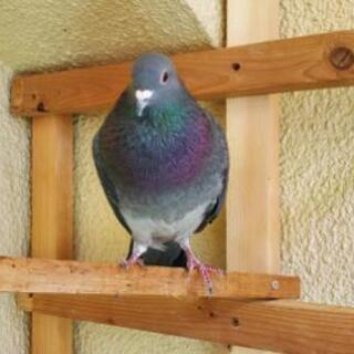 浜松町 竹芝桟橋付近で鳩をさがしています。